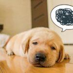 中国語学習 挫折しかけているかも…